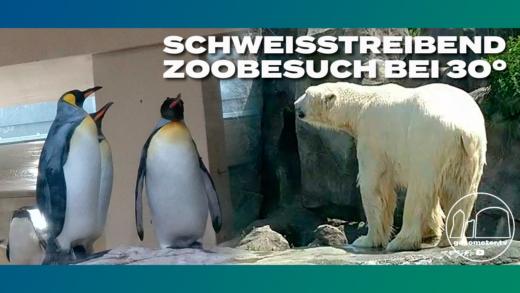 Thumbnail-Zoo